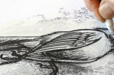 Drawing by Tom Tirabosco